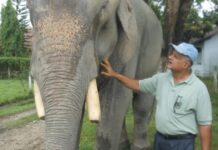 Dr. Sharma, an elephant doctor